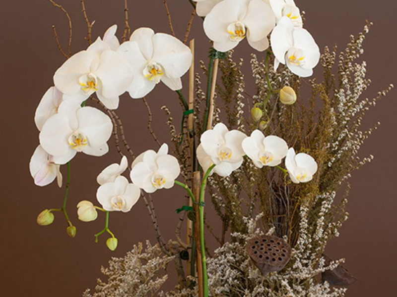 orchid_4572