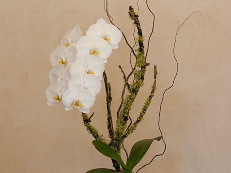 orchid_4670